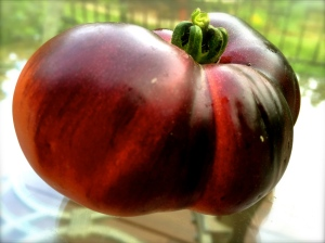 The Indigo Rose Heirloom Tomato